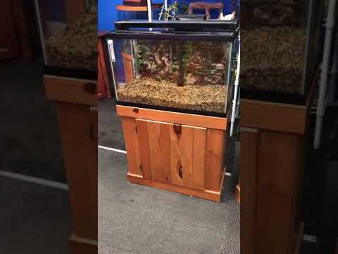 29 gallon Aquarium fish tank complete set up $200 - YouTube