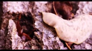 BBC Documentary 2015 HD Wild Island of the Caribbean Animal Life of Cuba National Geographic