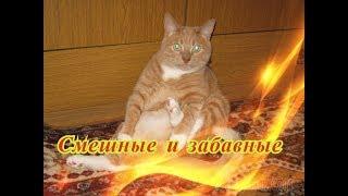 Смешные коты и кошки собаки Позитив Создай себе настроение