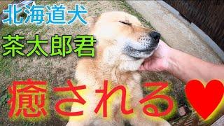 イイネ  ✨コメント  チャンネル登録よろしくお願いします♥ 超大型犬Newf...