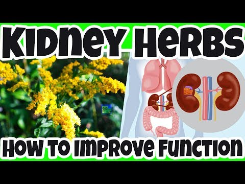 how-to-use-herbs-to-improve-kidneys-function-naturally?-boosting-kidney-function-with-herbs