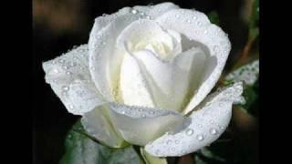 Aleksas Lemanas - Balta rože.wmv