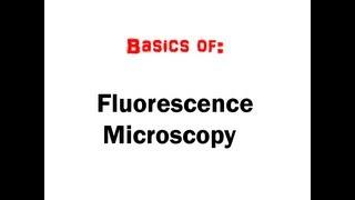 Fluorescence Microscopy in 5 mins (HD)