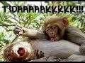 Sakit pinggang parodi kocak & lucu... Gamma1