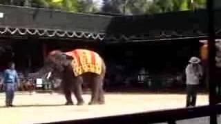 Слоны жгут!