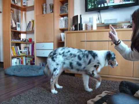 Dog Domino Okt09