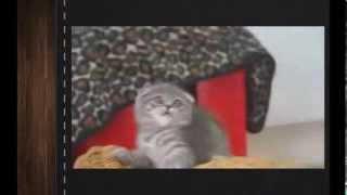 Самые смешные видео приколы про кошек котов и котят 16 супер милый котенок 2013