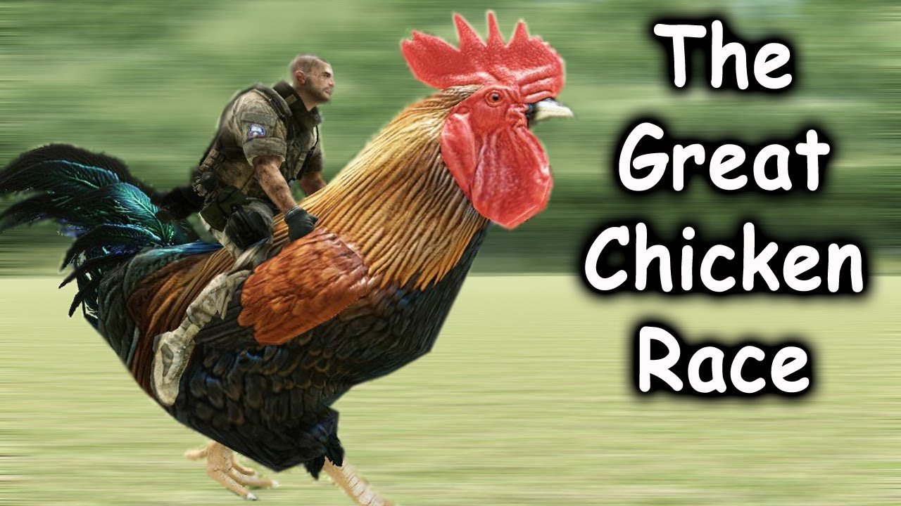 The Great Chicken Race 2 Youtube