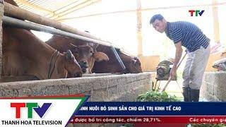 Mô hình nuôi bò sİnh sản cho giá trị kinh tế cao