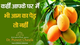 Vastu Shastra Tips - What are the Benefits of Gardening Mango Tree at Home?