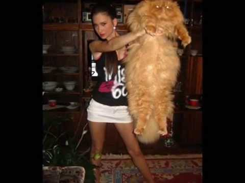 Biggest Cat In The World Guinness 2012 the biggest fattest cat in the world ! - youtube