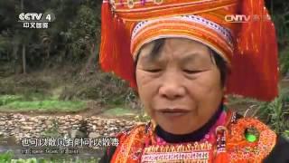 20160302 中华医药  健康故事:探秘大瑶山