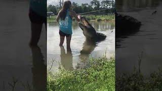 Girl Feeds Giant Gator || ViralHog