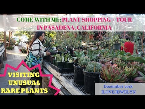 Come with me: Plant shopping + tour | Pasadena, CA | Dec  2018 | ILOVEJEWELYN