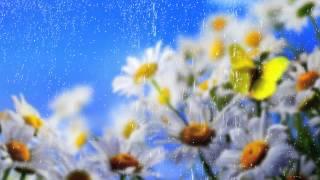 Ромашки, бабочка и дождь - Футажи для видеомонтажа в Full HD(1080p) качестве бесплатно