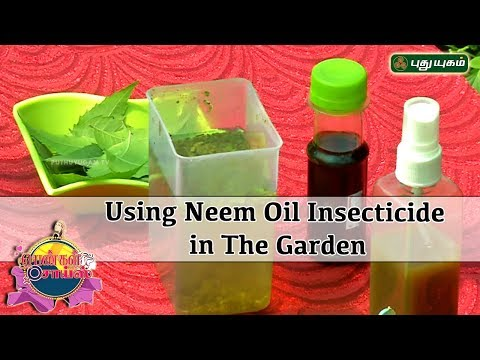 How to use Neem Oil Spray to organically control Insects and Pests - Gardening Tips - Pengal Choice - 동영상