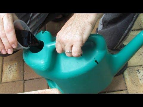 "Molasses based fertiliser using seaweed emulsion or worm ""juice""/castings tea.."