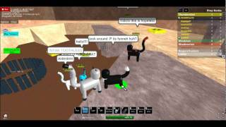 Cr@zy cats of Roblox!