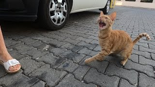 Crazy cat attacked me after feeding him