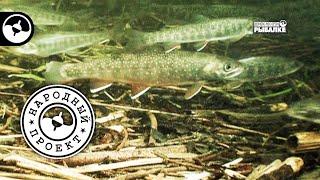 Рыбалка на Сахалине. Голец на удочку | Народный проект