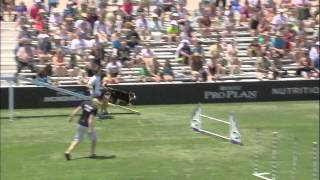 Large Dog Agility Winner - 2014 Purina® Pro Plan® Incredible Dog Challenge Western Regionals