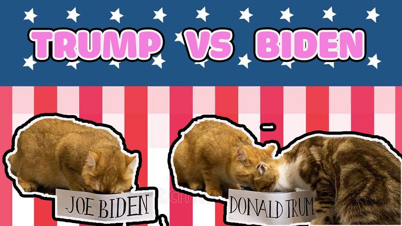 DONALD TRUMP VS JOE BIDEN - Who will be PRESIDENT OF THE UNITED STATES 🇺🇸🙀| Choice of KITTENS 😻