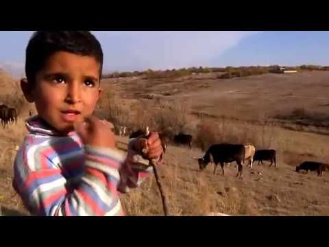 Four year old drover in Armenian village