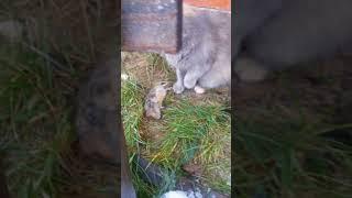 Наша кошка крысоловка принесла домой добычу