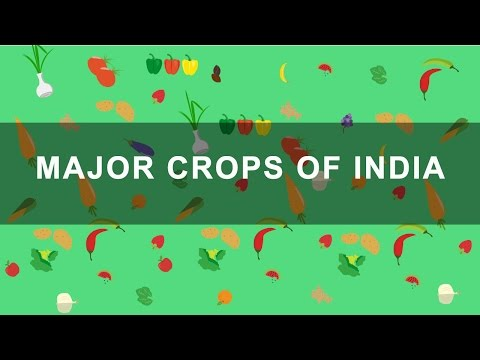 Major Crops of India