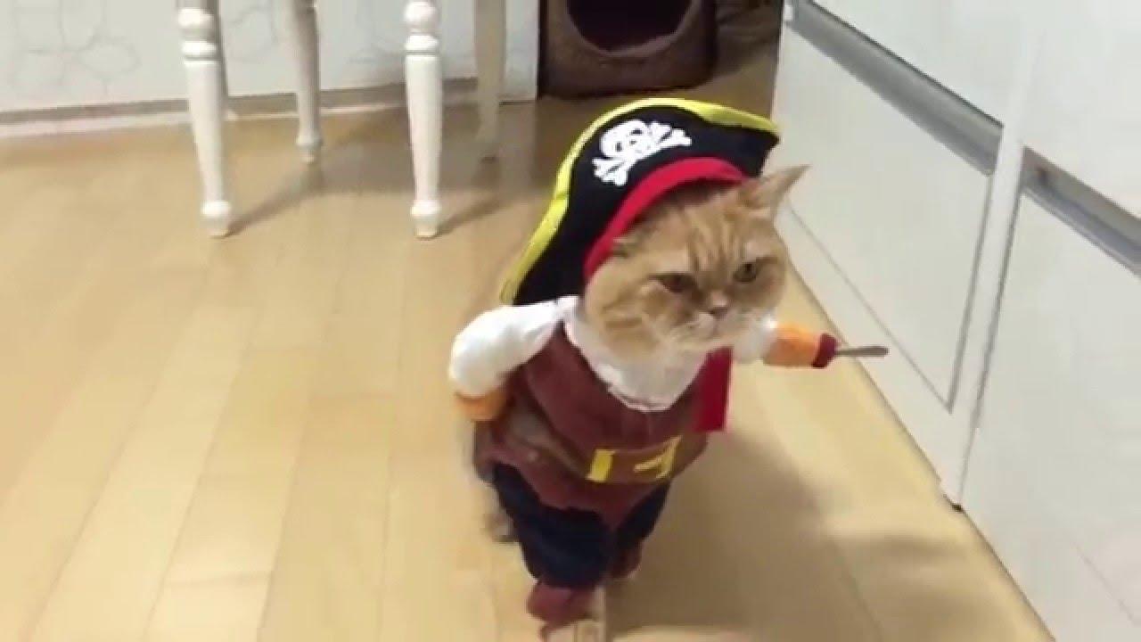 Картинки по запросу одноглазый кот