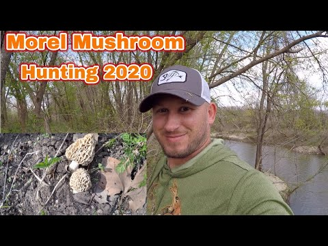Morel Mushroom Hunting Spring 2020