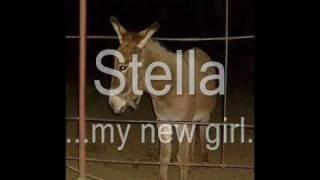 Stella...my new girl..wmv