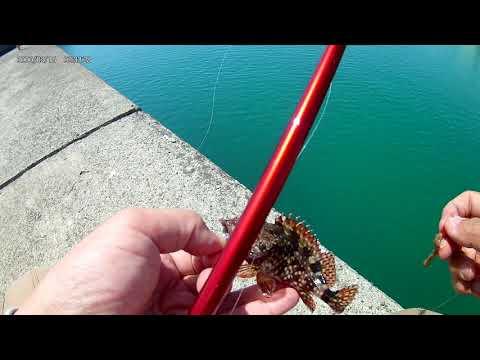 穴釣り用のブラクリ仕掛けを岸壁沿いに落としてカサゴ釣り