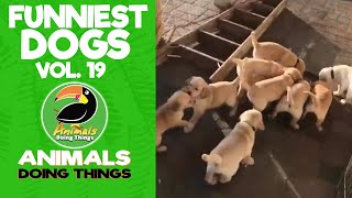 🐶 Try Not To Laugh Funny Dogs Vol. 19 | Animals Doing Things