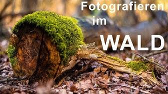 Fotografieren im Wald - Fotowalk und Motivsuche im Mecklenheider Forst - Olaf Munderloh Fotografie