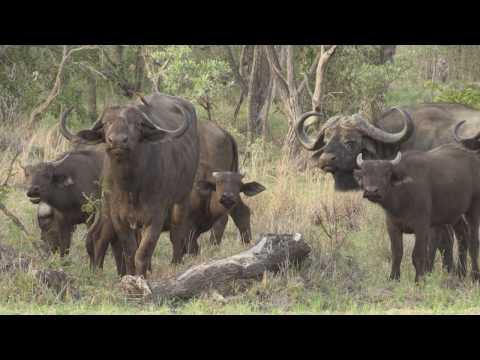 Kruger National Park Nov-Dec 2015