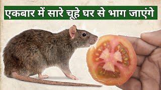 चूहे आपके घर का रास्ता भूल जायेंगे। घर को देखने से भी डरेंगे।rat repellant|chuhe bhagane ka tarika
