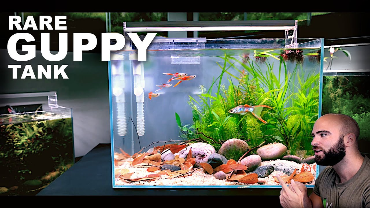 Aquascape Tutorial: RARE GUPPY TANK Natural Style (How To Step By Step Guide)