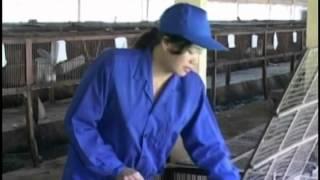 Kỹ thuật chăn nuôi thỏ