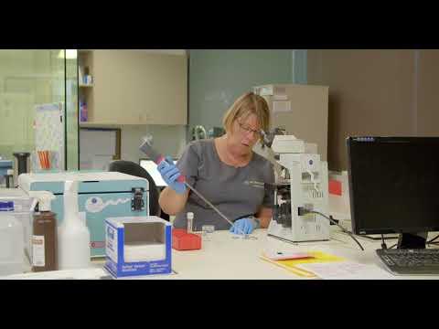 Intracytoplasmic Sperm Injection (ICSI): The Procedure