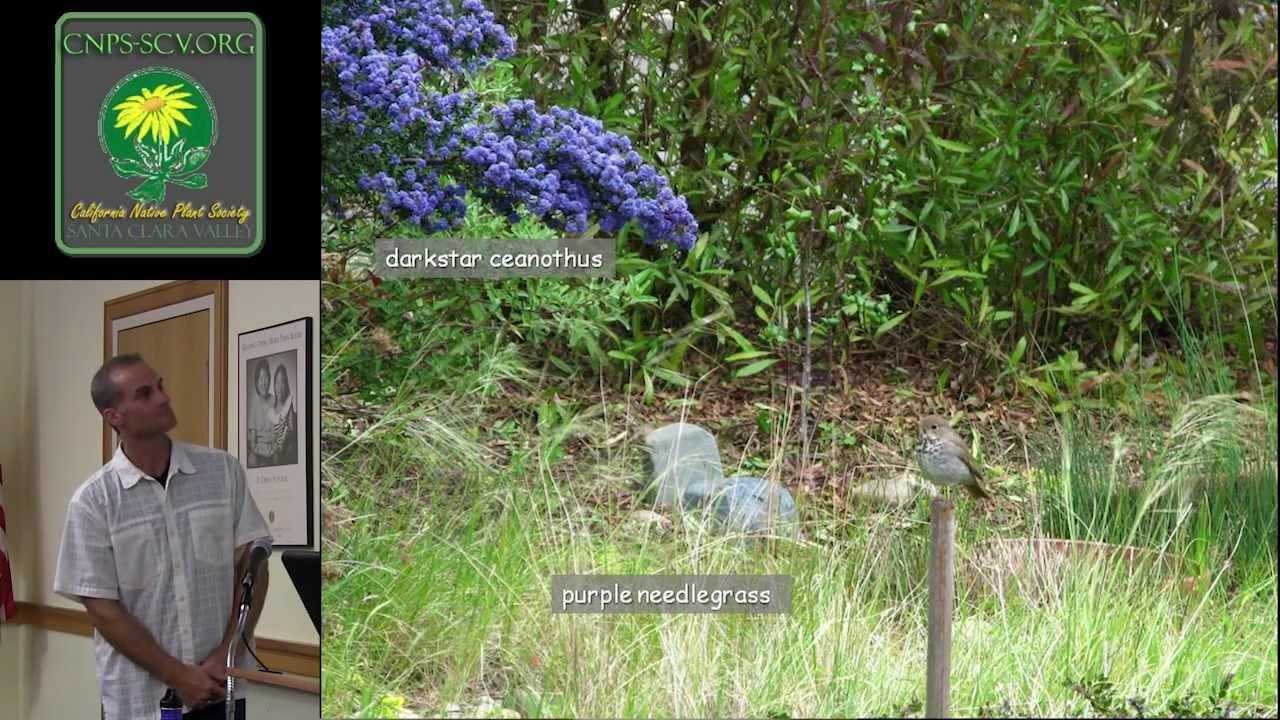 Native Plants for the Habitat Gardener - YouTube