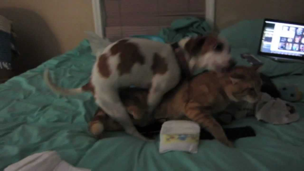 Female Dog Humps Male Cat  Too Funny - Youtube-5007