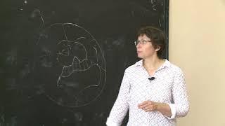 Замятина Н. Ю. - Регионы и города Арктики: специфика социально-экономического развития - Лекция 2