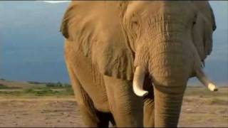 Wonderful Africa Wildlife and Landscape - 51J~é