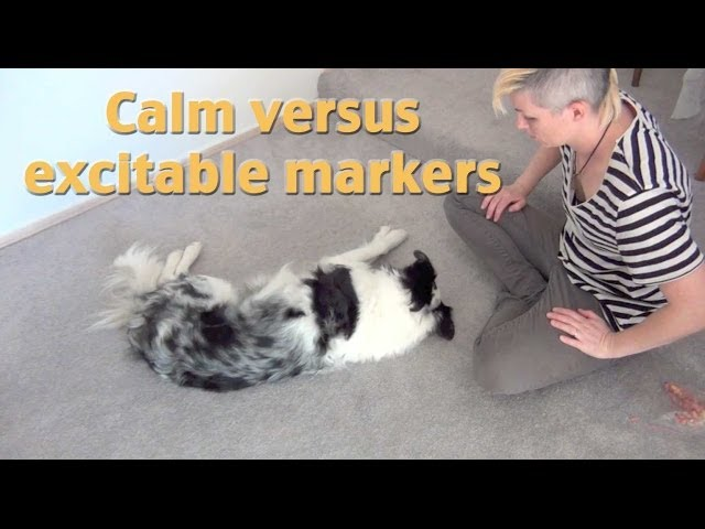 Create calm markers! A tip from my dog training seminar
