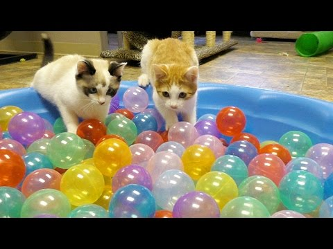 Thumbnail: Cute Kittens Play in Ball Pit