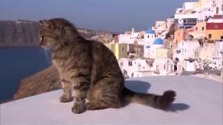 世界的動物写真家・岩合光昭氏がネコの目線で撮影した世界中のネコたち...