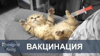 ВАКЦИНАЦИЯ котят: Когда и чем прививать котенка?