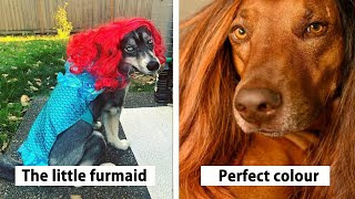 People Are Sharing Photos Of Their Dogs Wearing Wigs