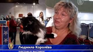 Выставка кошек-гигантов открылась в Киеве (новости)